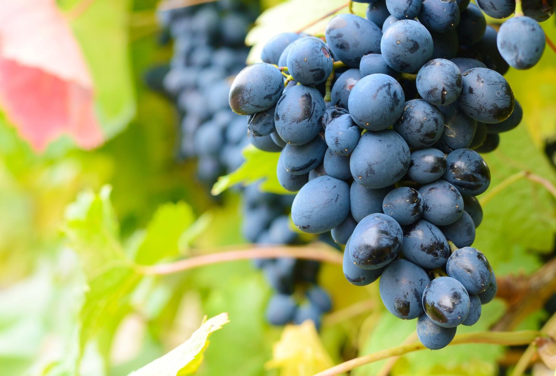 vini-rossi-italiani-biologici